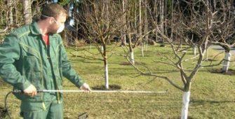 Обработка яблони, от вредителей, и болезней, весной, ландшафтные работы, ландшафтный дизайн, озеленение, Подмосковье,вредители яблони,обработать дерево от заболеваний,