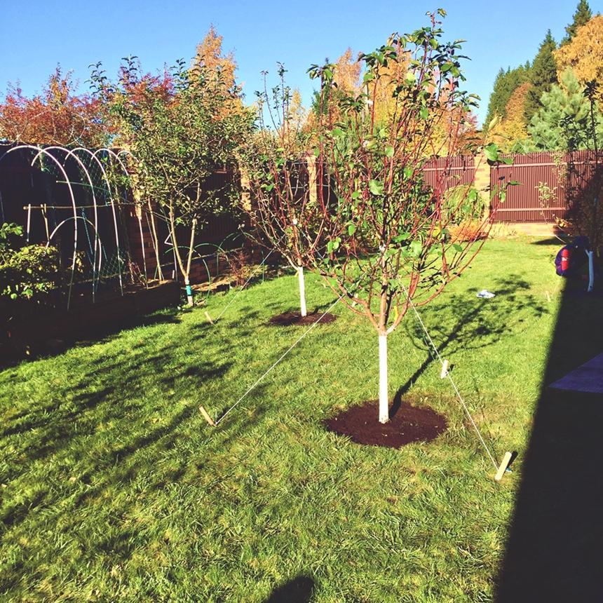 Посадка плодовых деревьев,посадка плодовых в одинцово,посадка плодовых в москве,посадка яблони,посадка крупномеров,уход и посадка деревьев,посадка деревьев весной,посадка в московской области,посадка кустарников