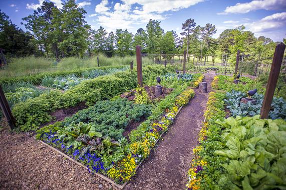 огород выращивание,огород,сад и огород,русский огород,огород 2019,урожайный огород,уход за огородом весной,уход за огородом без хлопот,сад огород москва,огород бесплатно,дача сад огород,посадка огорода,работа в саду и огороде,огород выращивание,огород посев,дачный огород,опрыскиватель для огорода,сад огород участок,