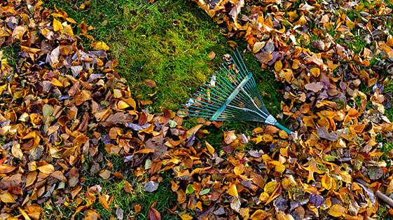 уборка листьев,уборка листьев в москве,уборка территория,садовый пылесос,снег крыша очистка,лист сад,уборка мусора,уборка территории от мусора,