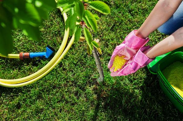 минеральные удобрения,подкормка сада,сад огород подкормки,подкормка сада весной,весенняя подкормка сада,удобрения для сада,удобрения для сада и огорода,удобрение сада весной,применение удобрений,удобрения москва,удобрения для растений,удобрения купить в москве,удобрения для рассады,органические удобрения,азотные удобрения,жидкие удобрения,внесение удобрений,комплексные удобрения,удобрения сайт,лучшее удобрение,удобрения для сада,удобрение для роз,удобрение для газона,клубника подкормка,подкормка рассады,подкормка весной,подкормка томатов,подкормка растений,весенняя подкормка,подкормка клубники,подкормка клубники весной,подкормка петунии,подкормка плодовых,подкормка смородины,внекорневая подкормка,подкормка йодом,