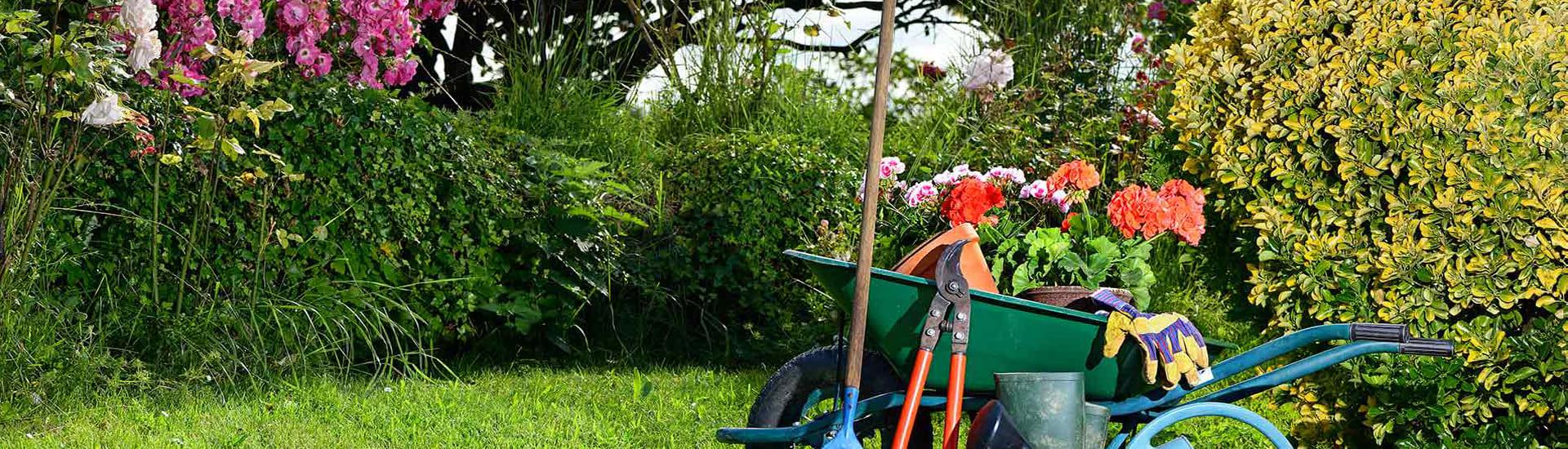 Услуги садовника в Подмосковье